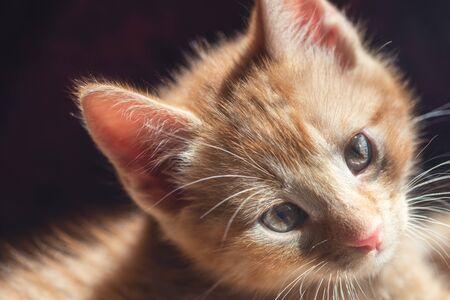 Portrait of Cute little ginger kitten in summer light