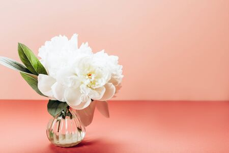 Fresh bunch of white peonies in small vase on dusty pink background. Card Concept, copy space for text