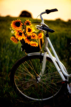 Vintage framed bicycle with sunflowers in basket standing in the field