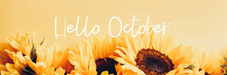 Hello October text and Yellow Sunflower Bouquet on bright Yellow Background, Autumn Concept, Top View, Space for Text, banner size Stock fotó