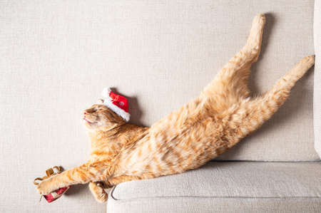 Cute little ginger cat sleeps on the sofa in a funny pose on its back with xmas hat on and present under its paws, Christmas or New Year postcard