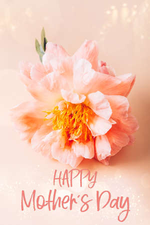 Happy Mothers Day card with text. Amazingly beautiful pink Peony on light pink background. Card Concept Фото со стока