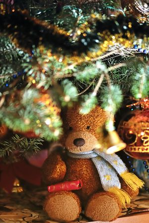 toy bear: Toy bear with gift under a fur-tree