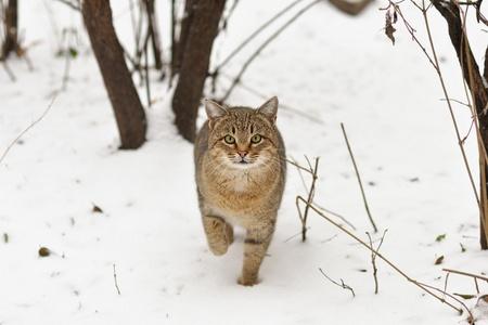 fad: Cat on snow