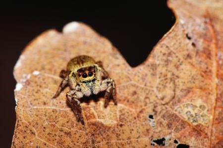 small spider photo