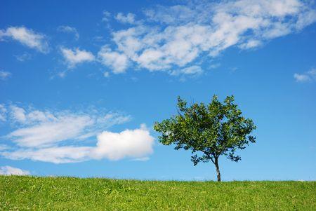 tree horizontal