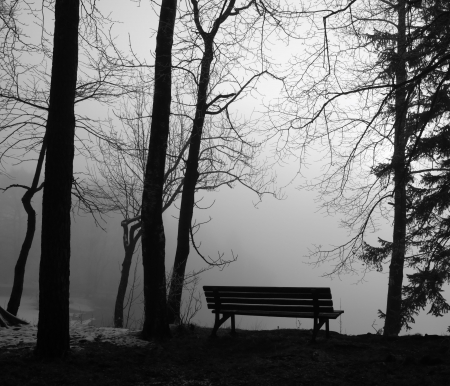 park bench in the mist