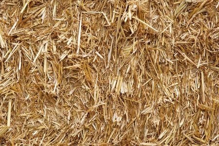 straw hay background texture