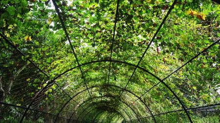 bird of paradise plant: Green corridor