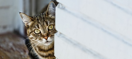 cat peeking out from behind the wall, space for text, copy space Stock Photo