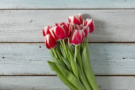 Fresh beautiful tulips - Mother's Day gift bouquet Stock fotó