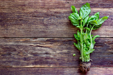 Bunch of fresh basil on wooden background Archivio Fotografico - 156345033