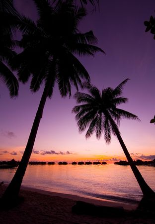 Coconut tree in shilouttee on tropical island of Mabul during sunrise Stock Photo