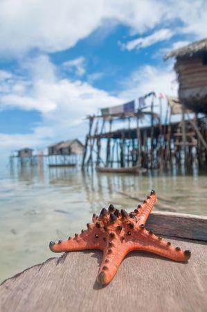Starfish sits on sand infront of sea gypsies makeshift