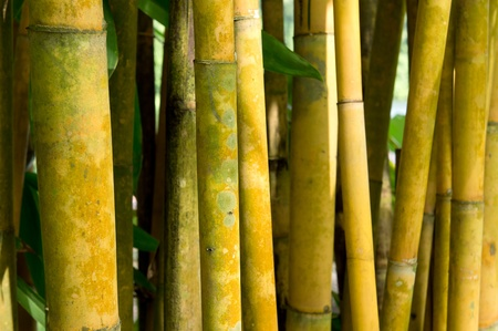 close-up of bamboo with shallow DOF  photo