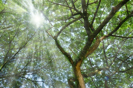 rain forest with rays of light coming through the trees Stock Photo