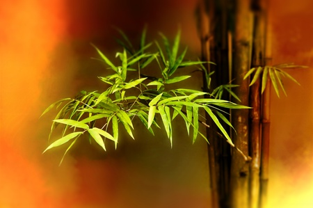 wellness environment: close-up of bamboo leaves with shallow DOF