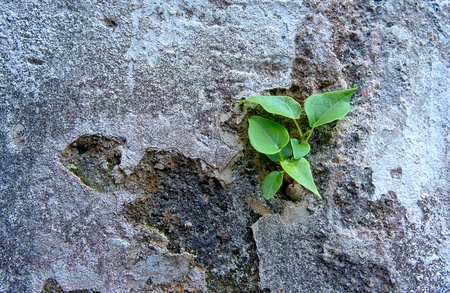 small tree with leaves sit on concrete wall photo