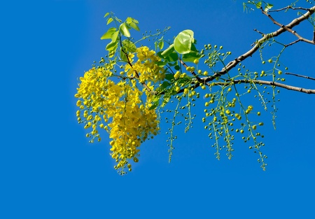 Bright yellow flowers against blue sky background photo