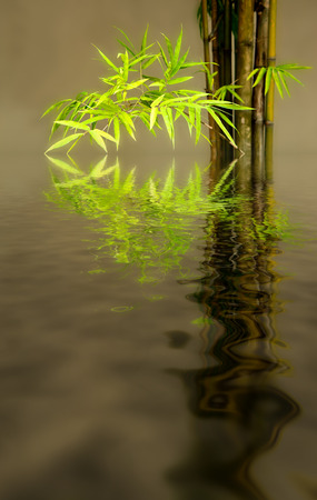 bamboo leaves reflects on water Stock Photo