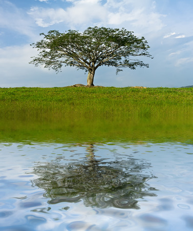 tree standing upright in the middle of the green grass Stock Photo