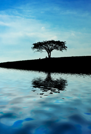 tree standing upright in the middle of the lake