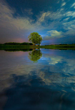 tree standing upright in the middle of the lake at night Stock Photo