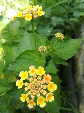 野生のコロンビアの奇妙な花の庭 写真素材
