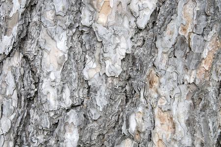 mottled skin: Bark Stock Photo