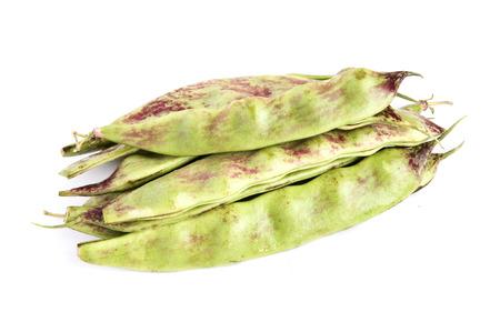 snap: Northeast of snap bean