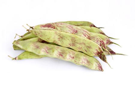 snap bean: Northeast of snap bean