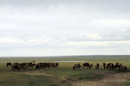 mongolia horse: The hulunbeir grasslands