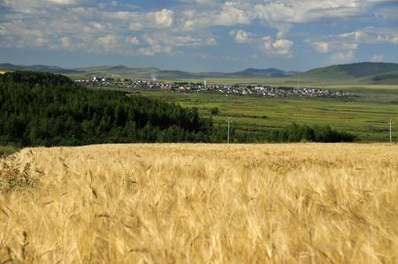 grasslands: The hulunbeir grasslands