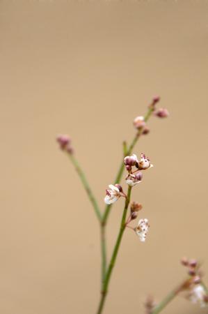 plantas del desierto: