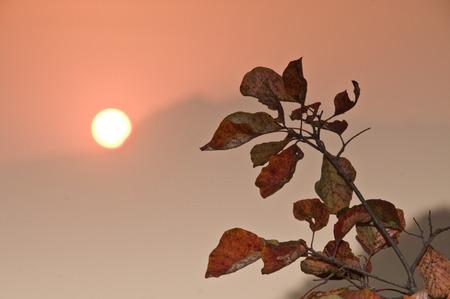 horizontal format horizontal: Autumn morning sunrise