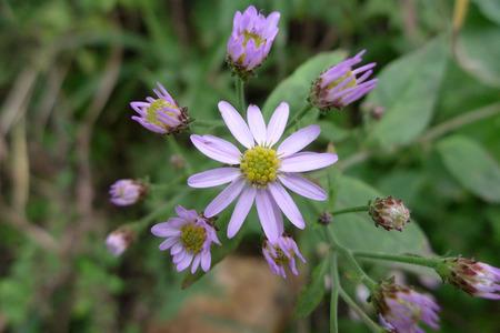 plantas medicinales: plantas medicinales