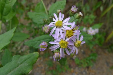 plantas medicinales: perro afortunado tomar plantas medicinales