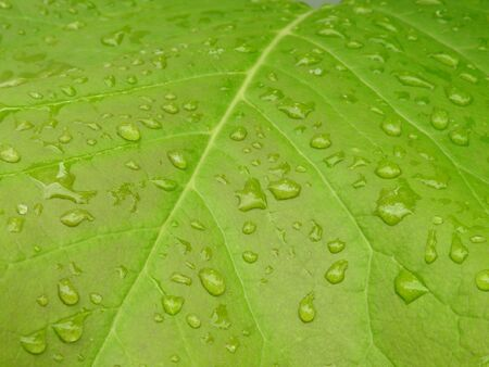 Leaves with waterdrops Stock Photo