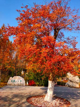 Beigong National Forest Park in Beijing
