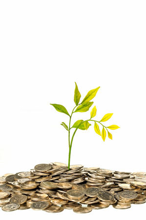 pile of coins: Financial Growth, tree on pile coins isolated on white background