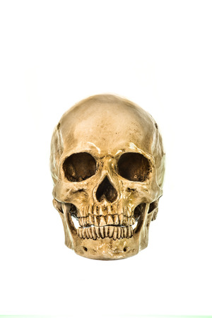 eye socket: Front view of human skull on white background