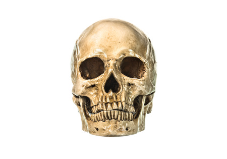 jawbone: Front view of human skull on white background