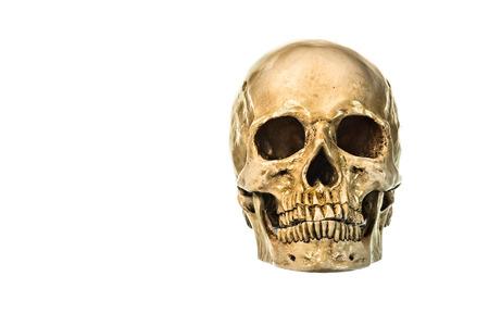 eye socket: Front view of human skull on white background