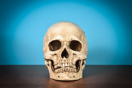 eye socket: Still life white human skull on wooden table Stock Photo
