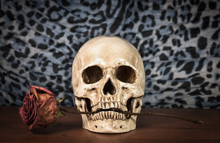 jawbone: Still life white human skull with dry red rose in teeth on wooden table
