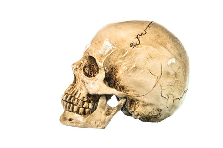 eye socket: Side view of human skull on white background Stock Photo