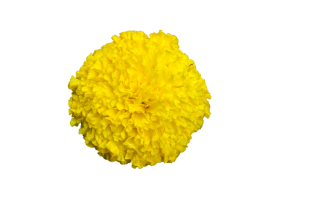 Top view of Yellow Marigold flower isolated on a white background with clipping path.