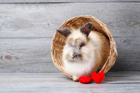 The brown furry rabbit was in a wooden basket with two red hearts beside it. Happy Valentines Day Concept
