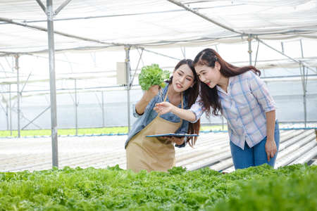 Young entrepreneur Asians farm organic vegetables for export abroad. She is checking the produce.