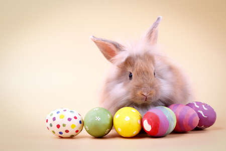 Cute furry rabbit With many Easter eggs